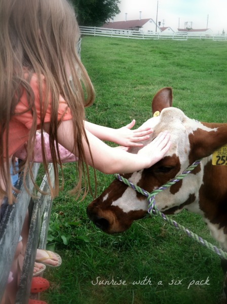 Petting the cow
