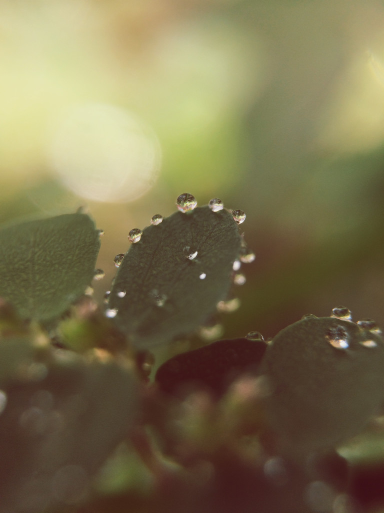 plants with dew